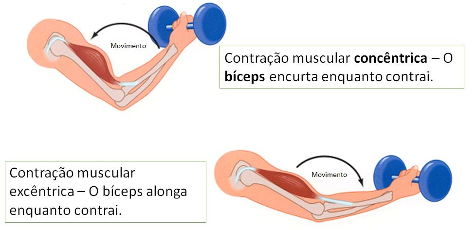 rais-data-saude-dor-muscular-tardia-dmt-contracao-muscular-concentrica-excentrica-pt