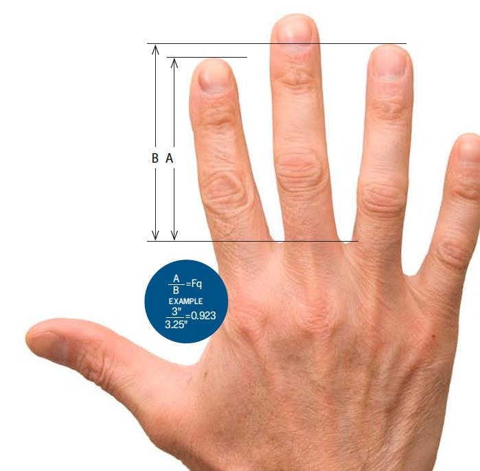 Tamanho dos dedos pode ser indicativo de saúde
