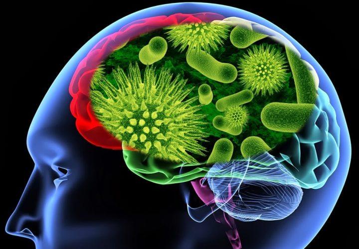 rais-data-virus-amigo-desenvolvimento-cerebral