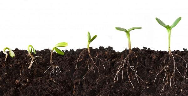 rais-data-saude-novos-habitos-como-criar-plantar-semente