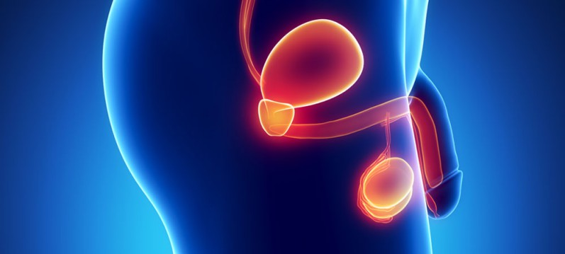 A próstata é um órgão do aparelho genital masculino responsável pela produção de parte do sêmen.